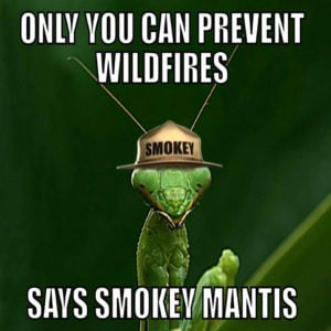 Smokey Bear – Memes and Mashups