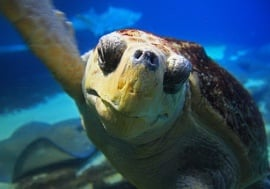 Georgia Aquarium – Turtle Quest