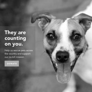AnimalLeague.org